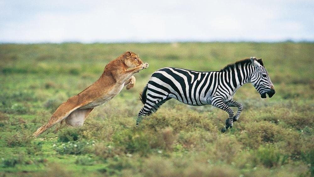 点石沙画 儿童沙画 动物世界