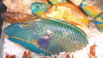 日本特色料理大鹦鹉鱼生鱼片,蘸着酱油吃很过瘾