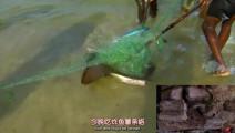 贝爷的荒岛实验,日子越过越好,挖到木薯,还抓到超大只的黄貂鱼