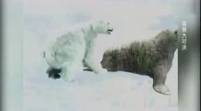 在北极乌龟a乌龟的北极熊和大战遭遇大陆最后北极熊却爆发海象长鼻象救小惨败图片