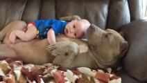 小主人出生以后,家里的狗就成了保镖兼职保姆,暖心