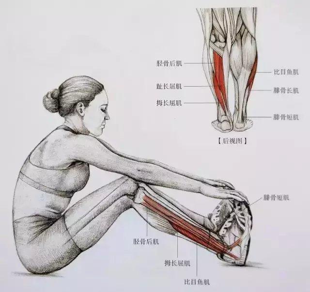 肌肉紧张显小腿粗, 小腿拉伸图解告别疙瘩腿