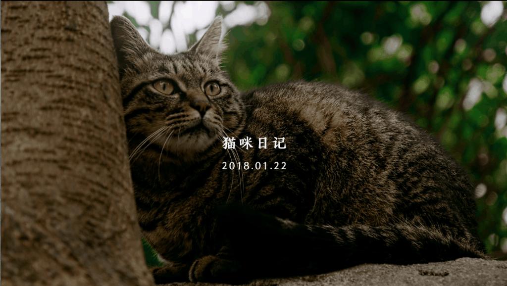 (猫咪日记