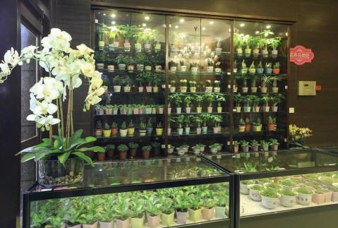 一橱窗的绿植