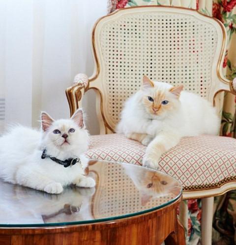 酒店里可爱的动物迎宾员 - 微信奴
