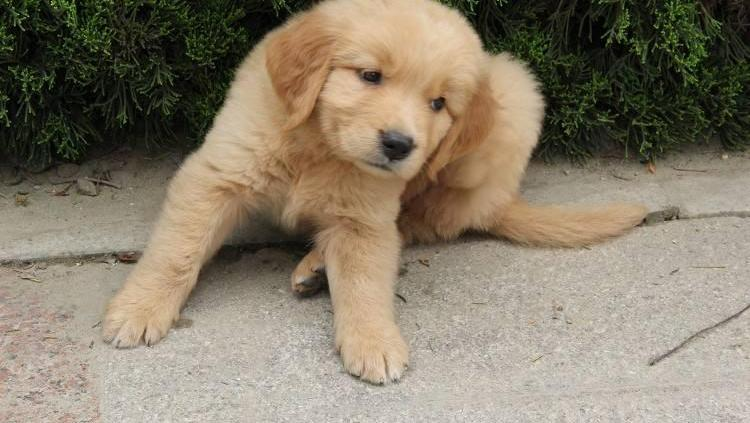 小流浪狗蹲原地一动不动,走近一看竟然哭了!