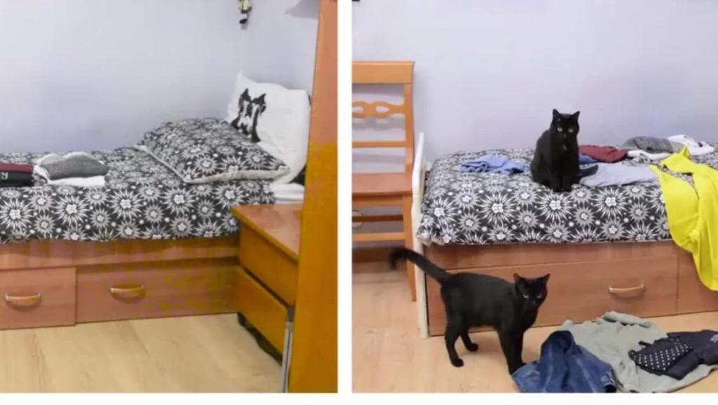 网友拍下自己养猫前和养猫后的对比,哈哈,太形象了