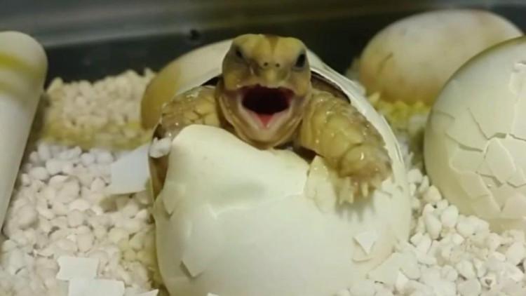 土豆创意造型小动物