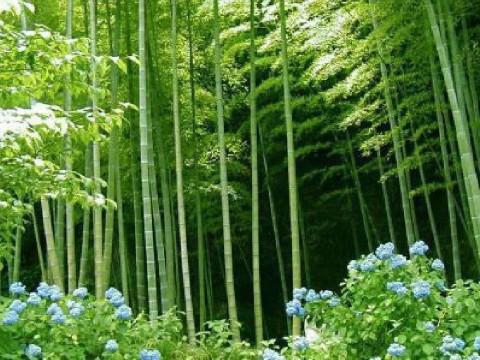 微信头像招财风景竹子