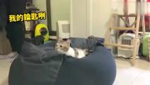 主人为了找钥匙, 翻箱倒柜, 把衣服一件一件放猫身上, 而猫..