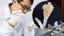 日本科学家耗时5年,复活2000万年前香菇,吃了会成仙吗?