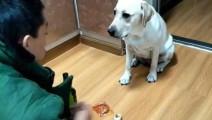 主人吃的太寒酸,狗狗实在看不下去,竟拿来自己的香肠!