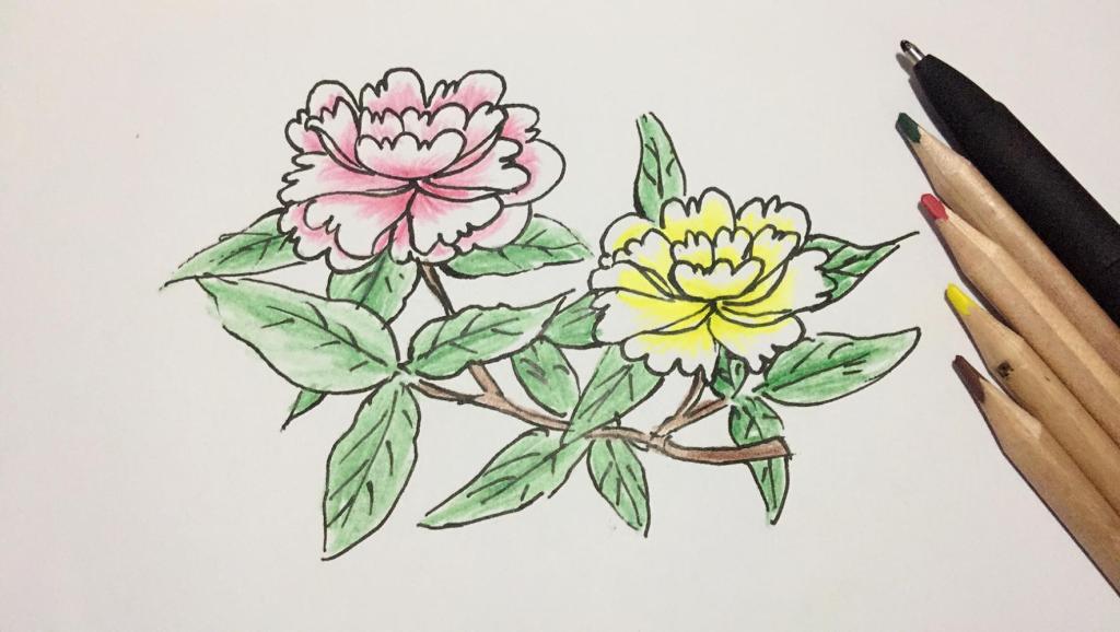 打开 打开 牡丹花简笔画,美丽高贵的牡丹绘画,简单容易画!