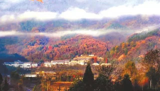 十一月 光雾山 红枫如火,植被清奇 错过了九月十月的川西美景没关系