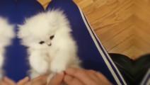 颜值高G点低的小奶猫,被主人一蹂躏就变成这样