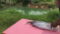 印度饮食文化:暴发户买来一条大金枪鱼,看他们是什么吃法,刚开始就没胃口了