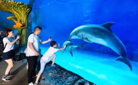 海洋动物与孩子们亲密接触