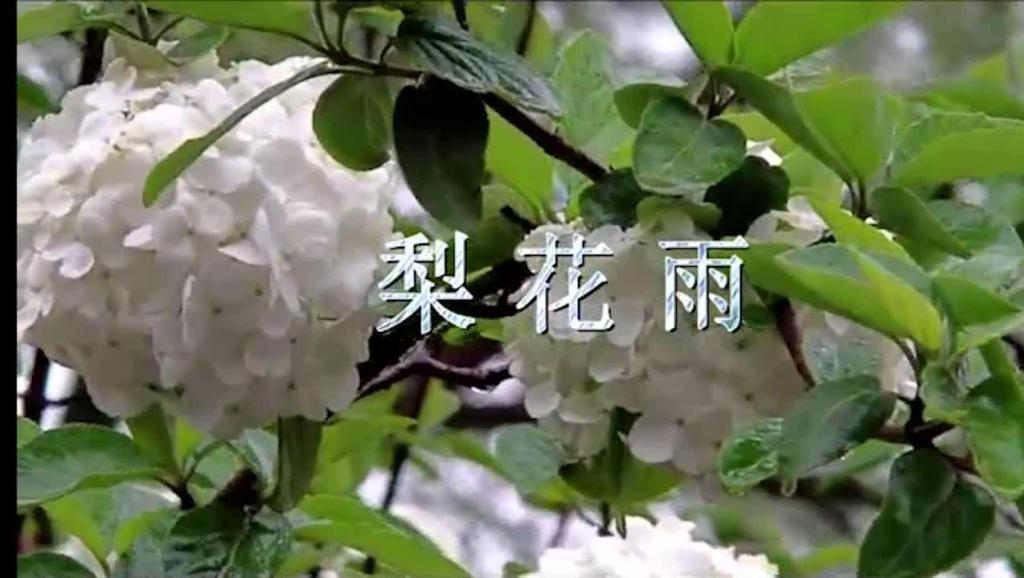 葫芦丝演奏杨兴义 打开 葫芦丝教学视频葫芦丝吹奏梨花雨葫芦丝一剪梅