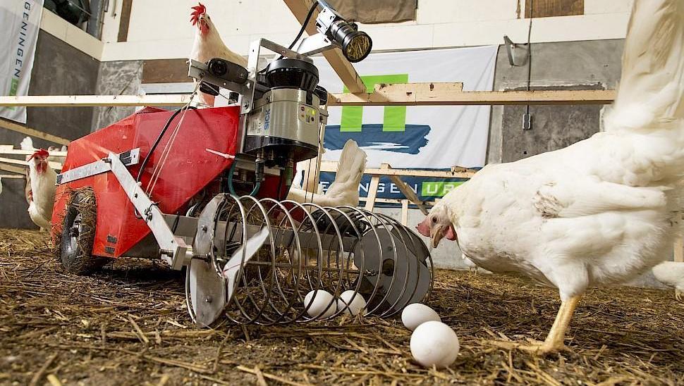 国外散养鸡自动拾蛋机器用着太方便,网友: 卖40万块我也愿意买!