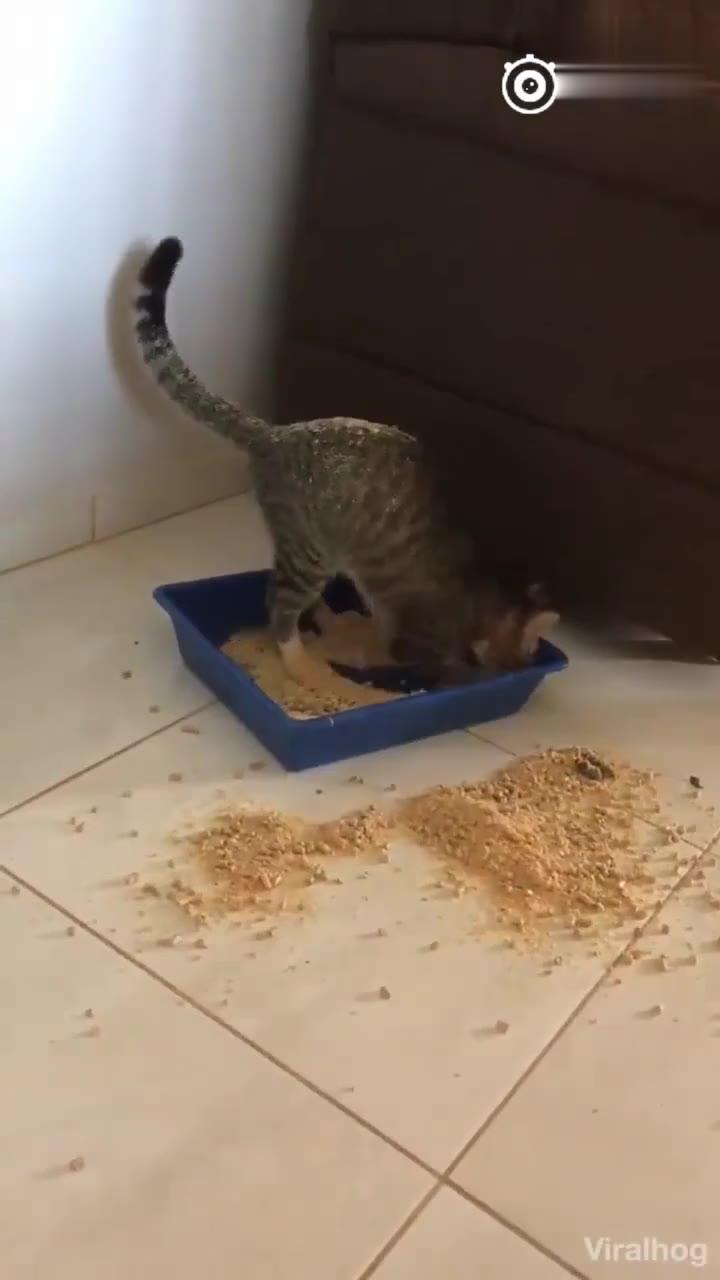 这是一只有洁癖的猫,这只猫为了不弄脏爪子练就了独特的蹲坑技巧