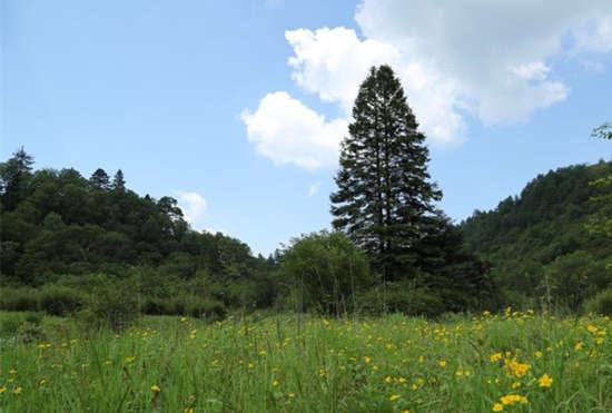 太平国家森林公园位于秦岭北麓,户县太平峪河上游,距西安44公里,咸阳