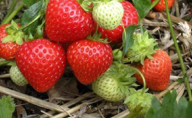 水果别买了! 家里就可以盆栽这几种水果, 想吃多少都行!