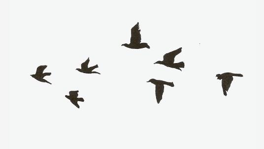 壮观!非洲鸟类大迁徙!