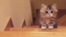 小猫咪上楼梯时躲躲闪闪的,好可爱