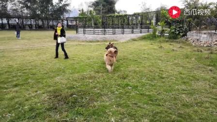小狗溜大狗, 周末和狗友出游上林毛塘湿地公园