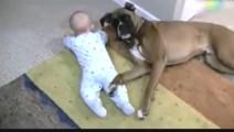 宝宝想爬行,却被狗狗压住,小宝宝生气了,后果很严重