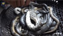 柬埔寨人制作蛇段的确有一套,这种吃法不敢恭维,但确实很美味