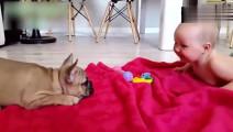 宝宝趴在地上和狗狗吵架,全家笑疯了,狗狗竟然能听懂宝宝说什么