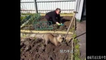俄罗斯的一只熊宝宝。。。居然让国宝级美男演员挖土豆,不愧是战斗民族 #搞笑逗比集中营