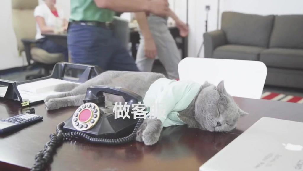 猫咪创意生活短片《办公室里的闹心事》