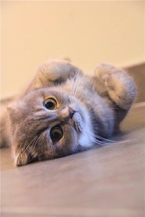 壁纸 动物 猫 猫咪 小猫 桌面 480_719 竖版 竖屏 手机图片