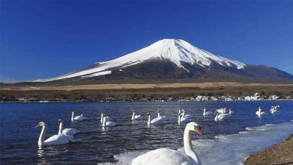 真没想到,日本富士山是租来的,日本每年要上缴天价租金
