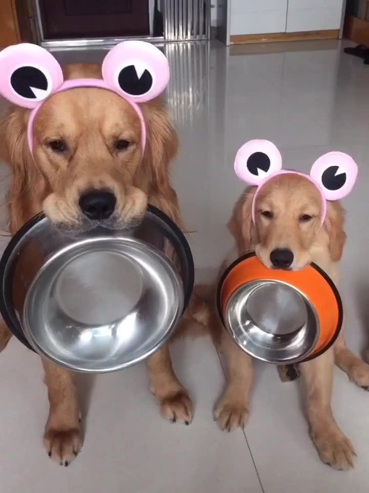 动物吃饭的样子