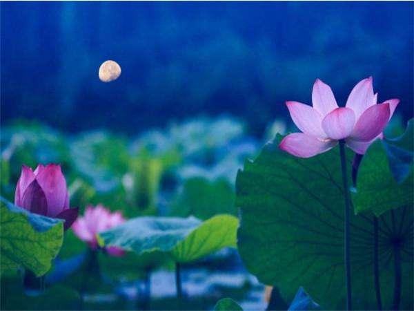 重阳前后, 桃花朵朵开, 横财滚滚来, 官运亨通, 人生大转弯的生肖
