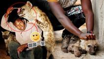 一点都不怂!非洲男子亲自用嘴喂食鬣狗丨呵呵一笑