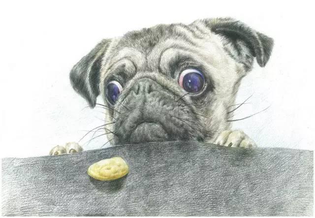 超写实的彩铅动物画, 看第一张就跪了!