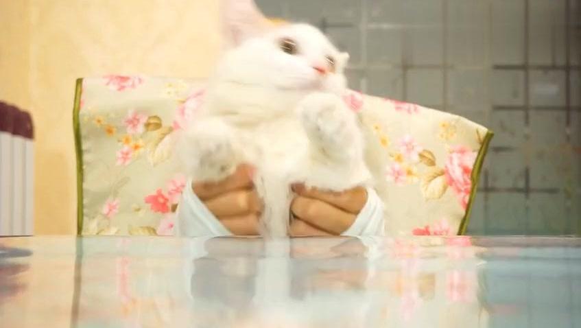 两只可爱的猫咪跳舞