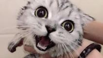 我想这只猫一定叫豆豆 可怜