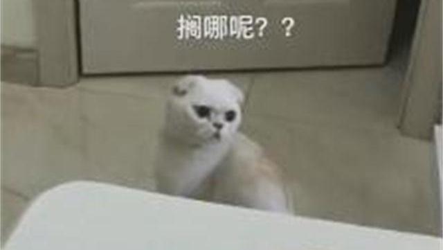给猫咪做了个智商测试,看来得多给它吃核桃了!