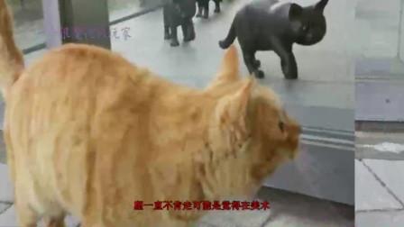 猫咪艺术展览会,引来了真的喵星人,驻足观望迟迟不愿