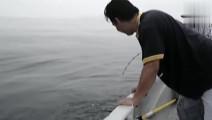 刚打捞上来的巨型鱿鱼,这么大的鱿鱼,估计要10个人才能吃完