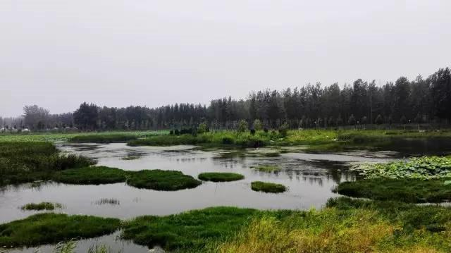 湿地植物群落手绘