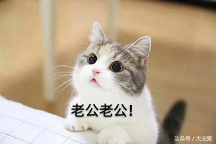 大喵望眼欲穿, 超萌超可爱的喵星人表情包, 萌萌哒小猫抱回家!