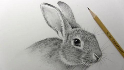 丽简笔画图片 兔子素描-叶罗丽简笔画图片