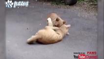 猫狗大战拉开帷幕,你们是来搞笑的吗?