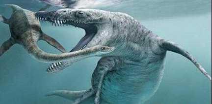 作为陆地脊索动物的祖先海纳螈到底长什么样呢?